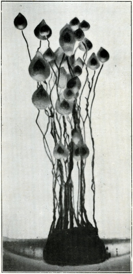 noyaux.jpg