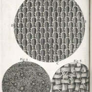 "Scheme XIV - On the surfaces of Rosemary, and other leaves (from ""Micrographia"" by Robert Hooke - 1665)."